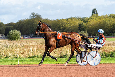 cheval course racing Novial