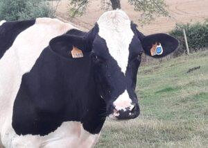 vache capteur sensehub